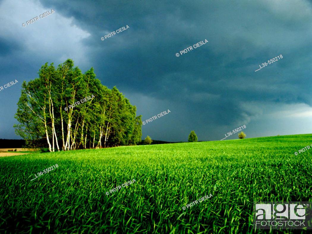 Stock Photo: Spring in the field. Podlasie region, Eastern Poland.