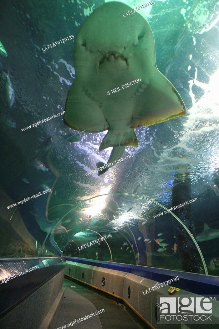 Stock Photo: Underwater World. Sunshine Coast. Moving walkway through the watertanks of the aquarium. Shark and other large fish.