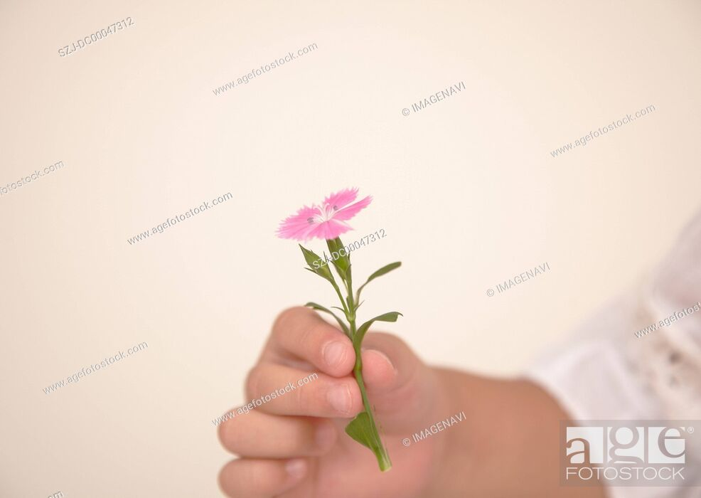 Imagen: Hand holding flower.