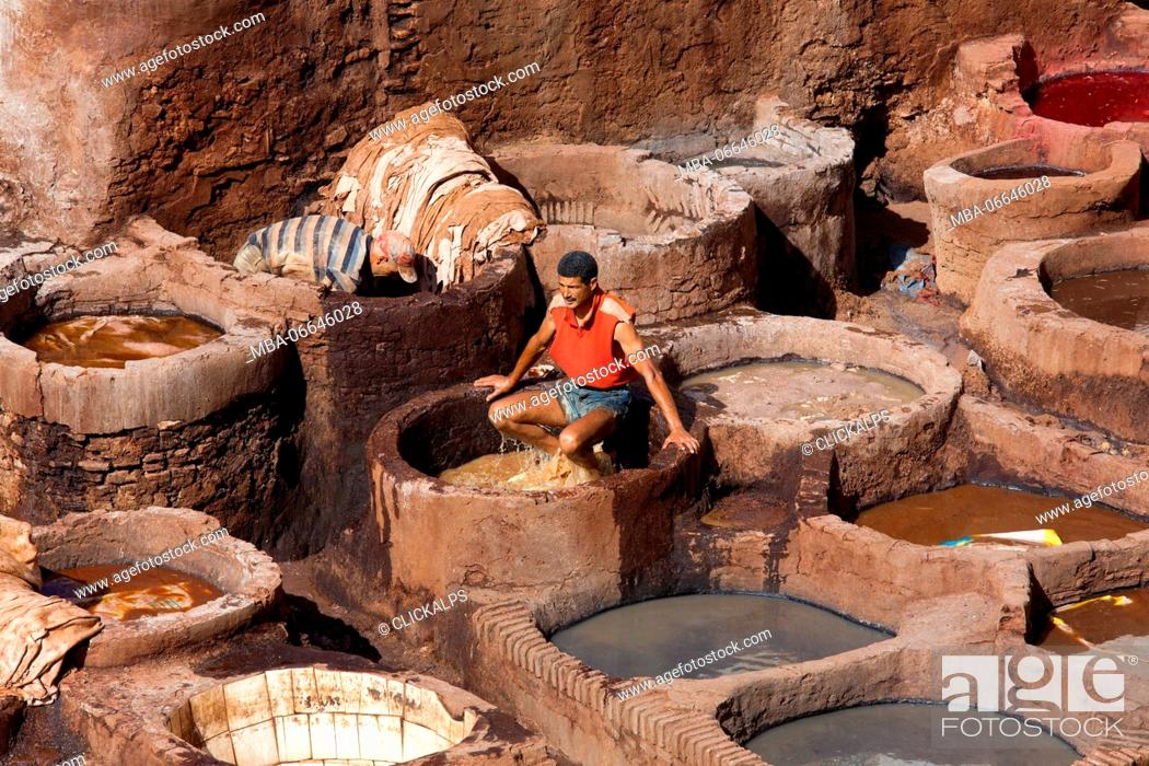 Stock Photo: North Africa, Morocco, Fes district, Fez Tannery, Chouara Tannery. Leather processing.