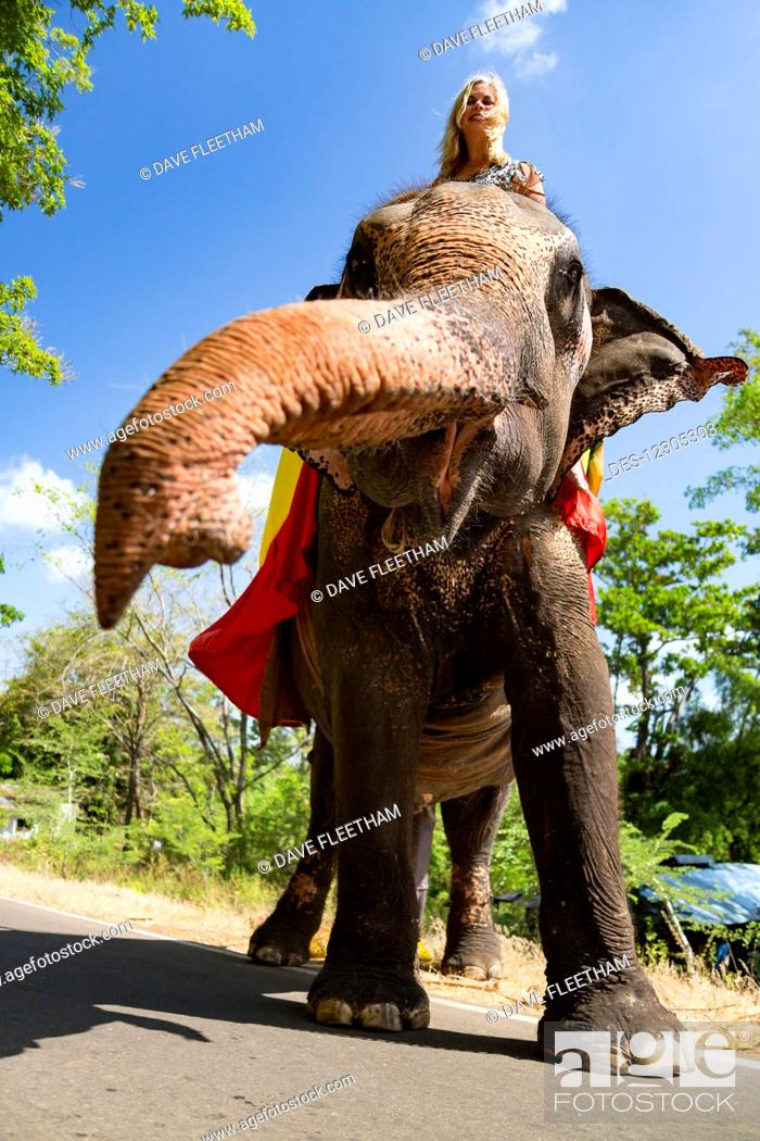 Imagen: A woman riding a Sri Lankan elephant (Elephas maximus maximus) on a road near Sigiriya, an ancient palace located in the central Matale District near the town.