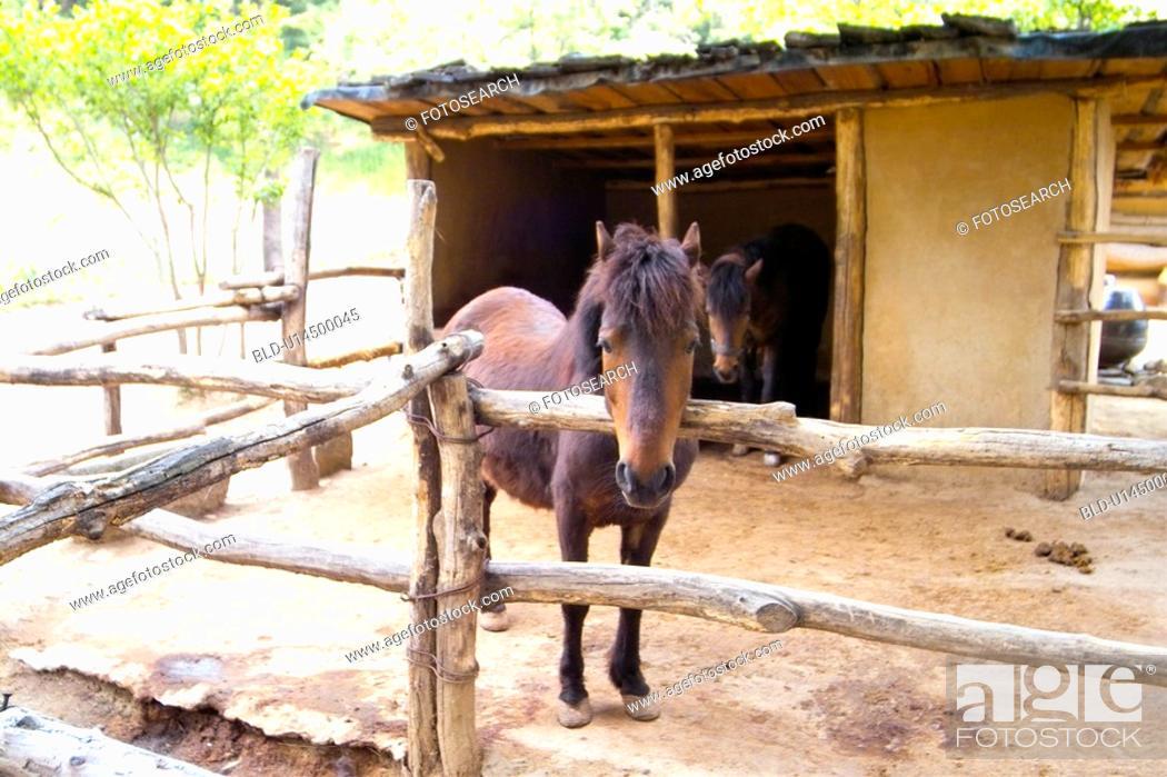 Stock Photo: domestic animal, animal, land animal, mammal, vertebrate, horse.