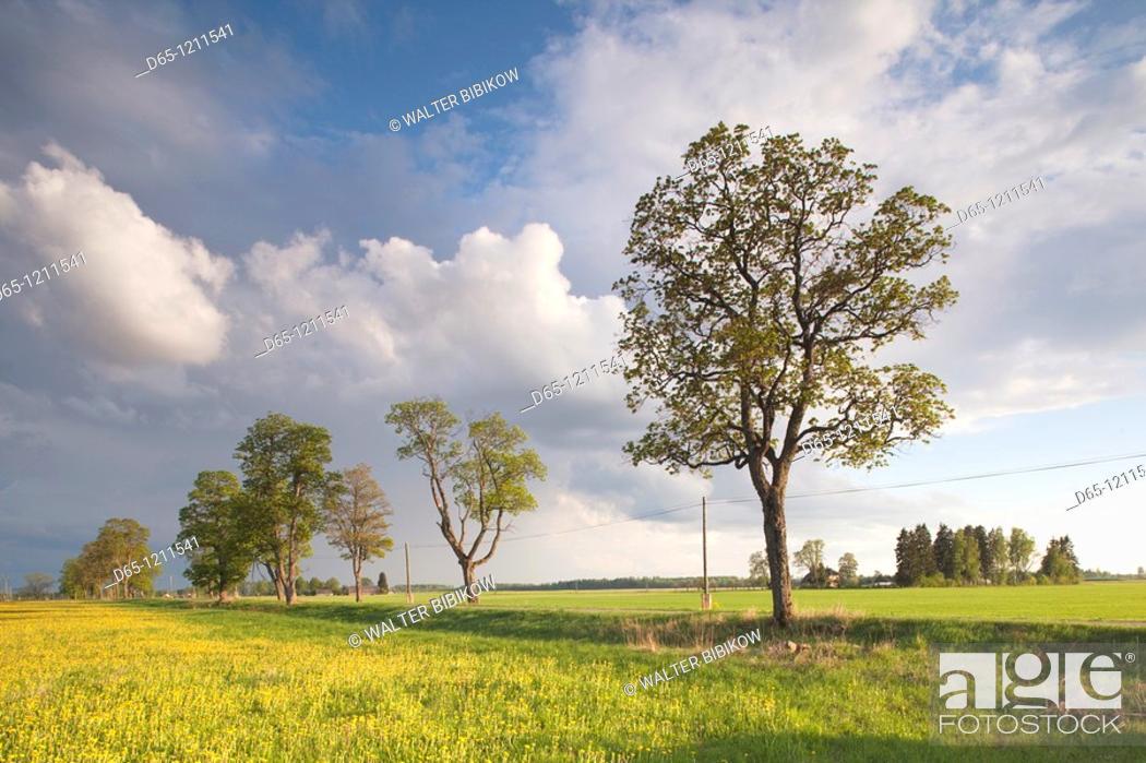 Stock Photo: Latvia, Northeastern Latvia, Vidzeme Region, Gauja National Park, Dikli, country road.