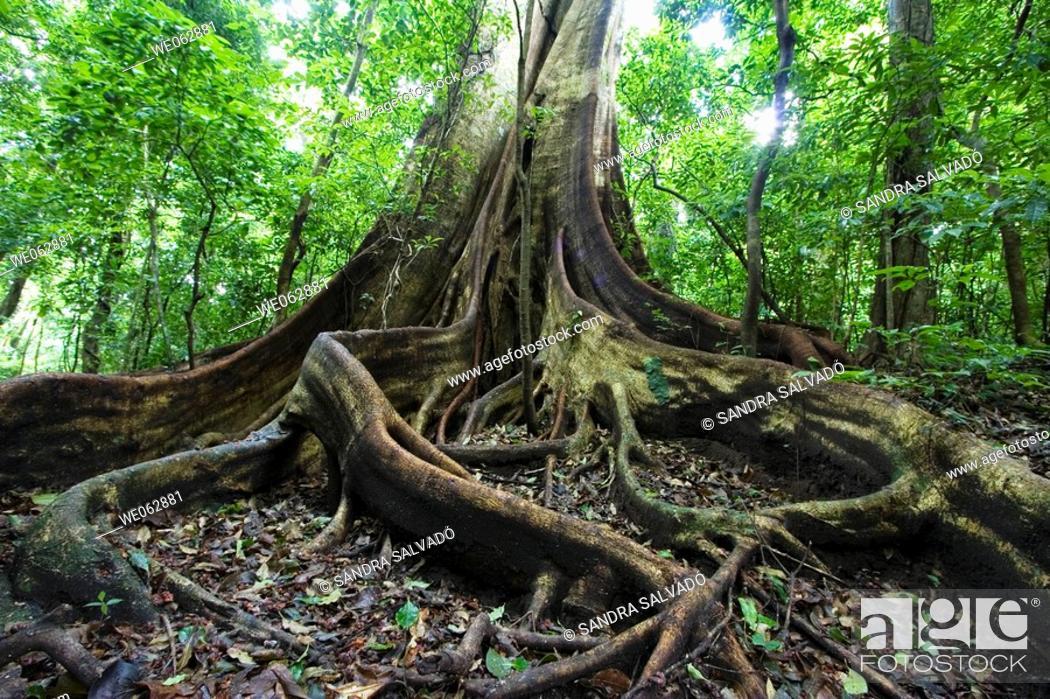 Stock Photo: Rincon de la Vieja National Park, Guanacaste, Costa Rica.