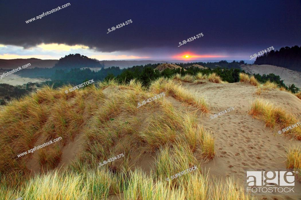 Stock Photo: A sunset and a storm over Honeyman Sand Dunes, in Jessie M. Honeyman Memorial State Park, along the Oregon Dunes National Recreation Area, near Florence, Oregon.