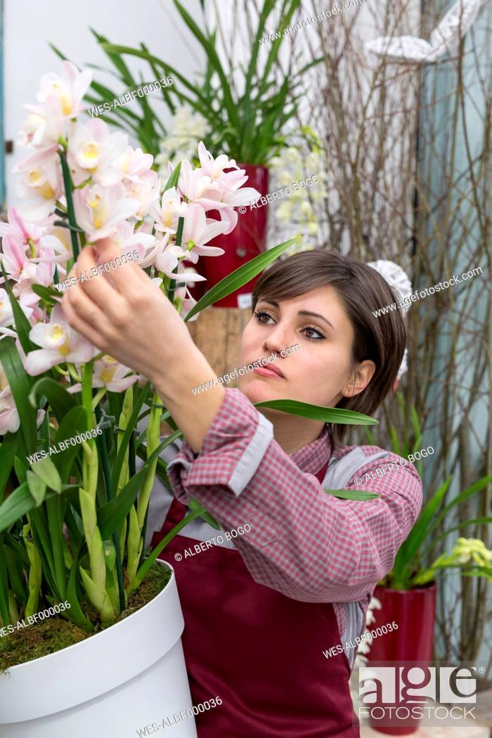 Stock Photo: Young female gardener working in greenhouse.