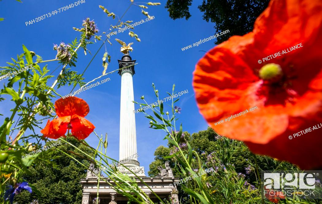 Imagen: 13 July 2020, Bavaria, Munich: Through a flower meadow with red corn poppy, the leaf-gilded bronze cast statue of the angel of peace can be seen enthroned on a.