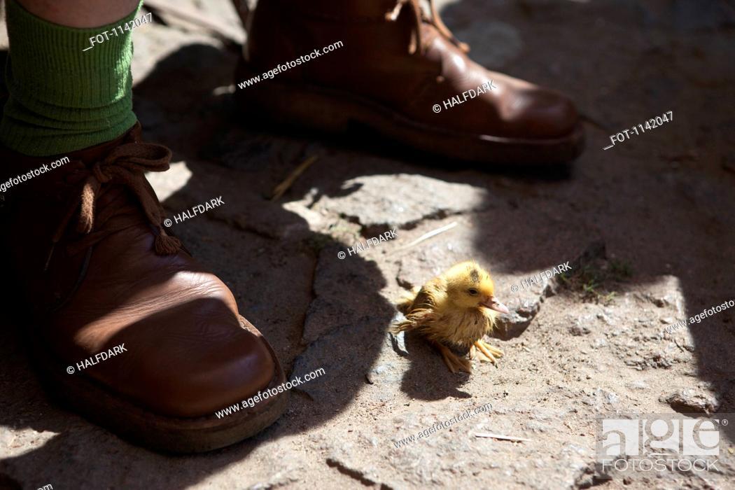 Stock Photo: A duckling near the feet of a man.