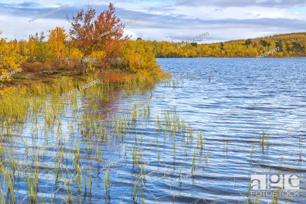 Stock Photo: Lake in autumn season with colorful birch trees in yellow and orange surrounding it, Abisko, Kiruna county, Swedish Lapland, Sweden.