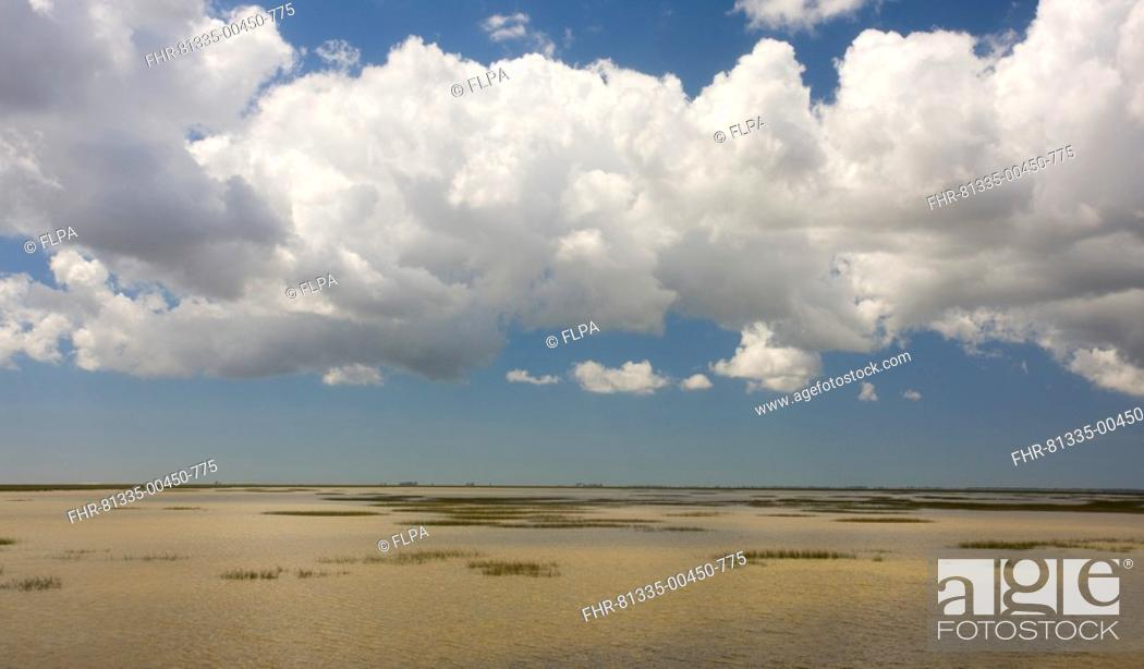 Stock Photo: View over saline marshland, The Marismas, Coto Donana N P , Andalucia, Spain.