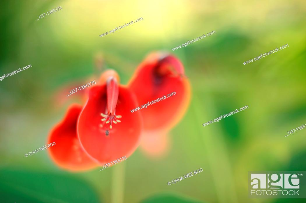 Stock Photo: Tropical flowers.