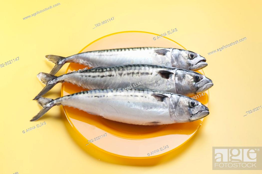 Stock Photo: orange dish with three raw fresh mackerels.