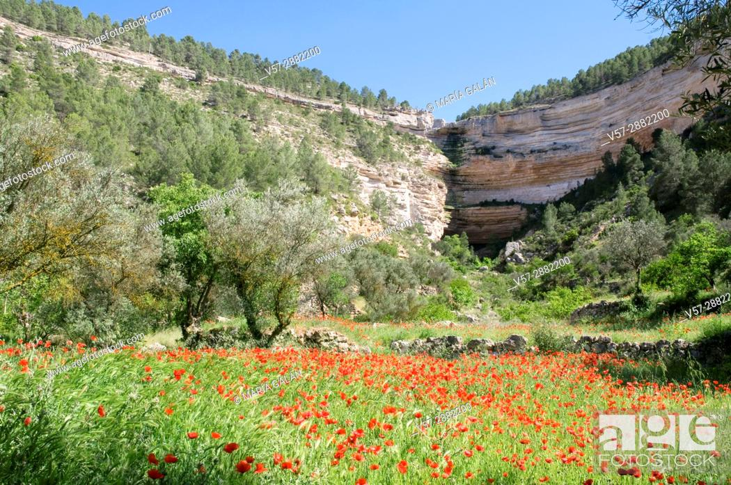 Stock Photo: Poppy field and precipices. Hoz del Jucar, Albacete province, Castilla La Mancha, Spain.
