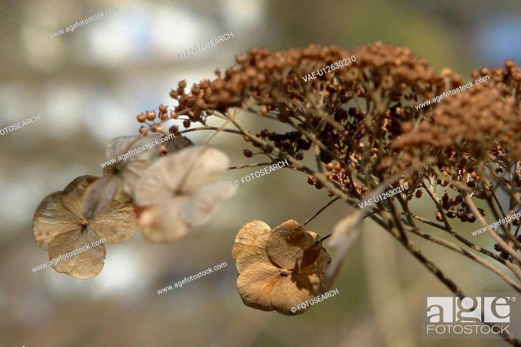 Stock Photo: felder, wiesen, berne, blooms, blumenrfarben, botany, colored.