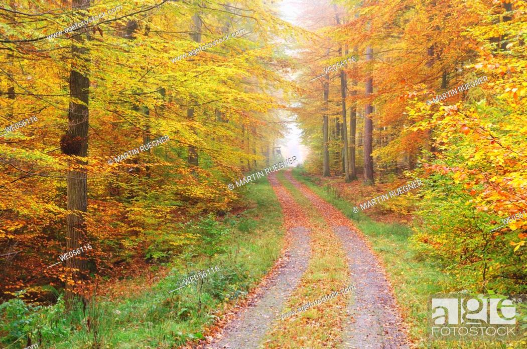 Stock Photo: Track in forest. Spessart, Franconia, Bavaria, Germany, Europe.