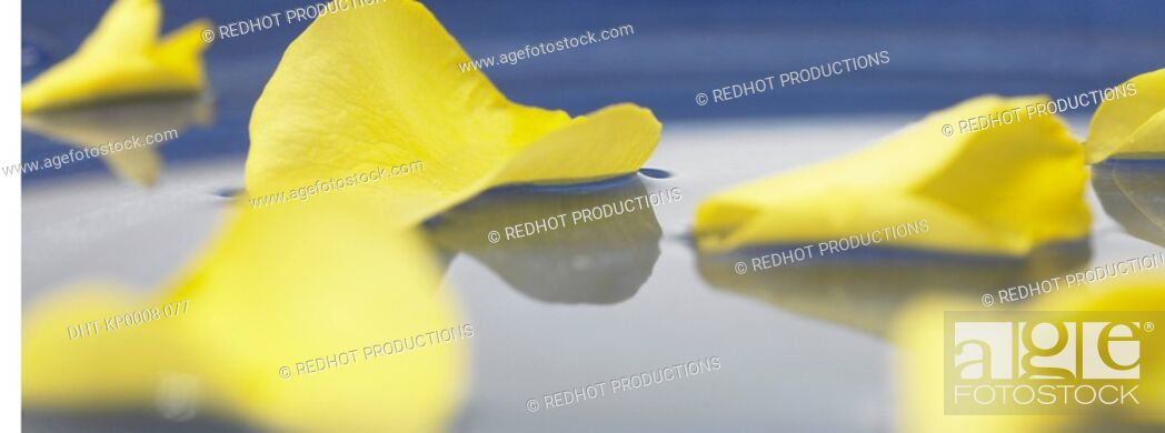 Stock Photo: Yellow Petals in bowl of water.