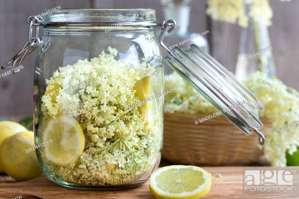 Stock Photo: Fresh elder flowers and lemon in a glass jar, ready to prepare a natural elder flower syrup.