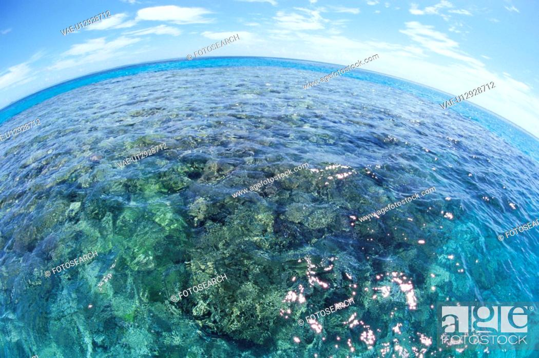 Stock Photo: A Coral Reef And A Blue Sky.