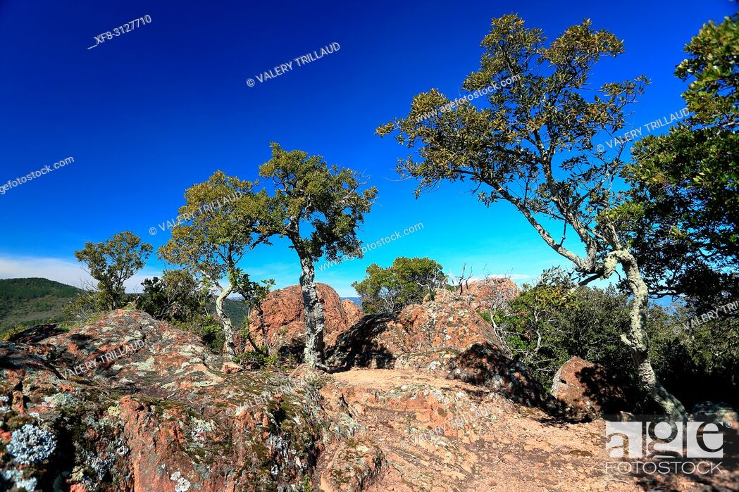Stock Photo: Paysage vers le Blavet, Var, 83, PACA.