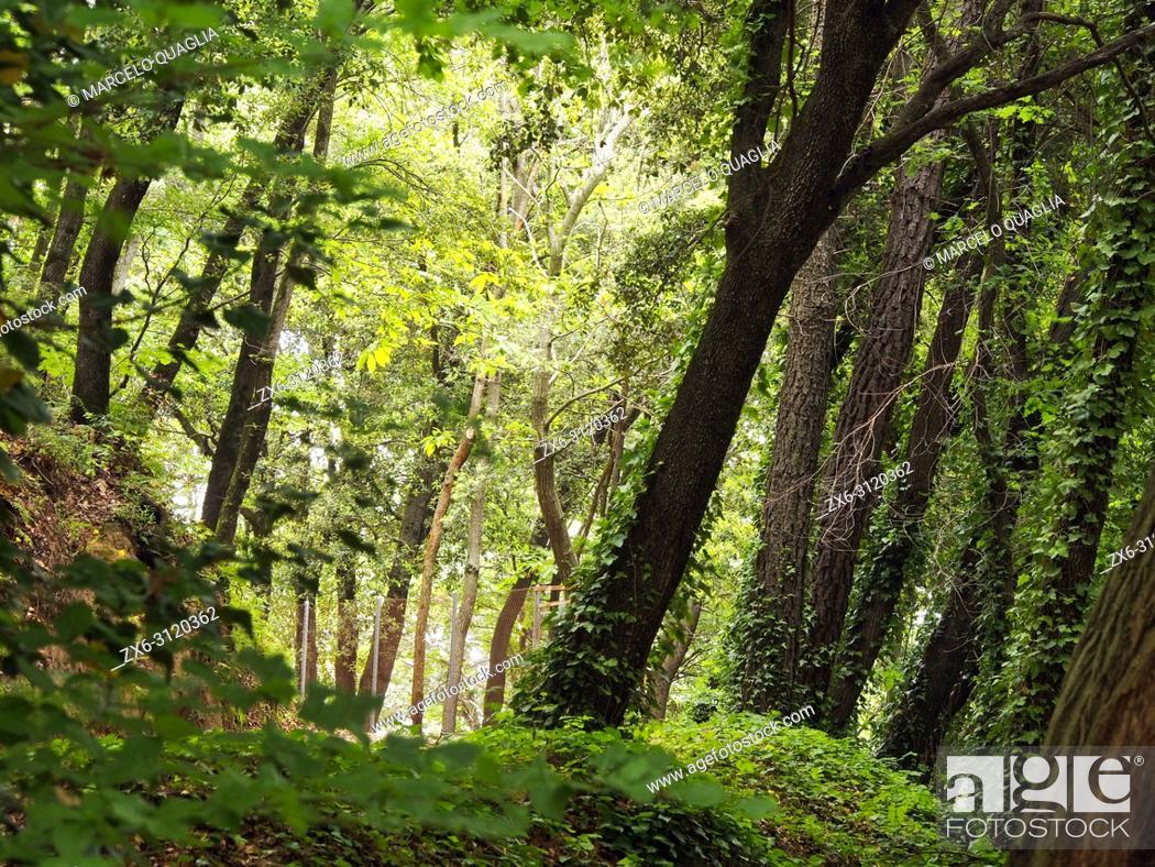 Imagen: Mixed forest (beech, holm oaks, sweet chestnut) at Sot de Boixaus site. Montseny Natural Park. Barcelona province, Catalonia, Spain.