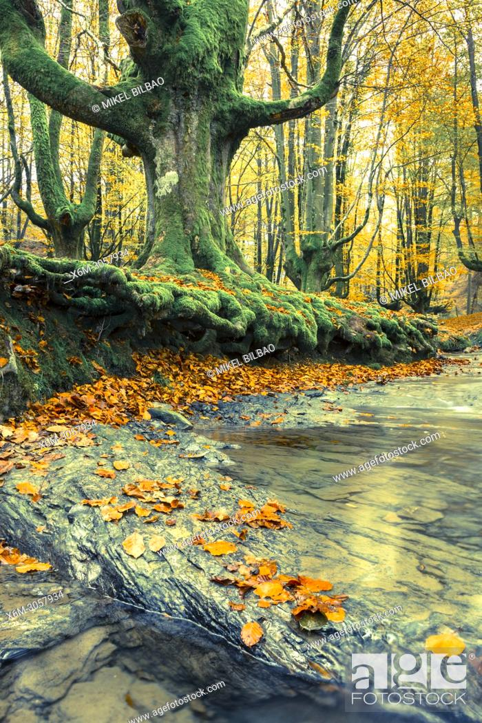 Stock Photo: Beechwood and rivulet. Otzarreta, Gorbeia Natural Park, Biscay, Spain, Europe.
