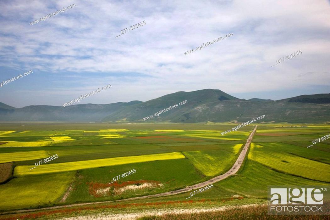 Photo de stock: Italy  Umbria  Norcia  Highland of Castelluccio di Norcia  Lentils fields with Poppies.