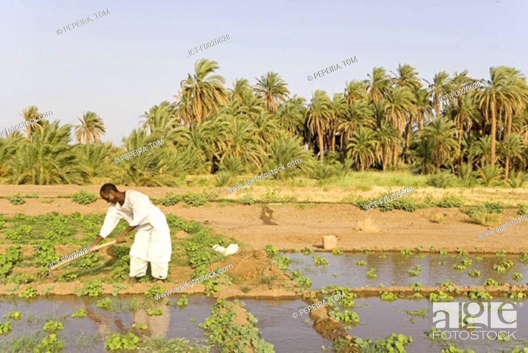 Stock Photo: Sudan, Eastern Sahara, Soleib, working farmer.