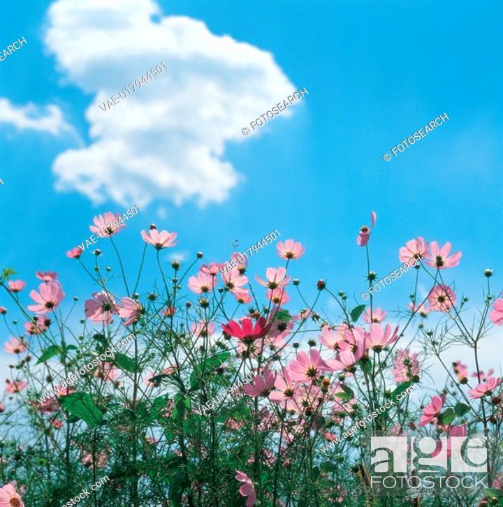 Stock Photo: cloud, fall, sky, nature, flower, film.