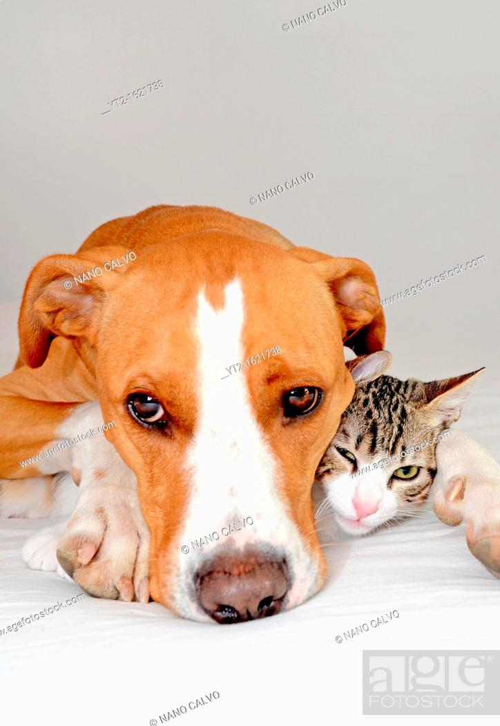 Stock Photo: Dog and Kitten interact at home.