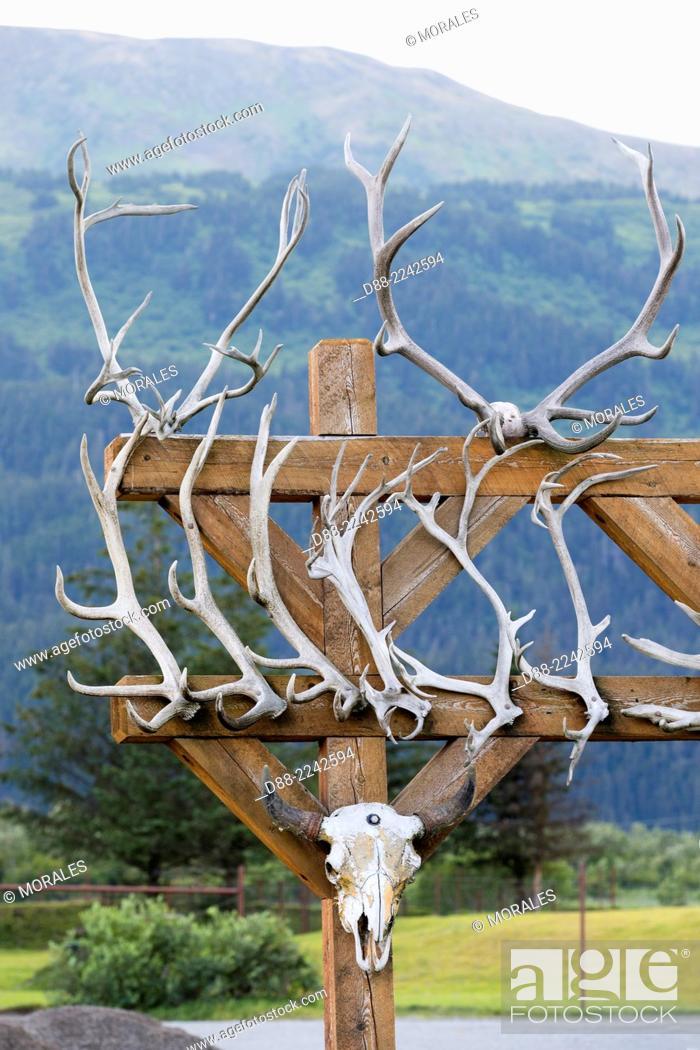 Stock Photo: North America, United States, Alaska, Anchorage, Alaska Wildlife Conservation Center, antlers of Wapiti, Moose and Muskox.