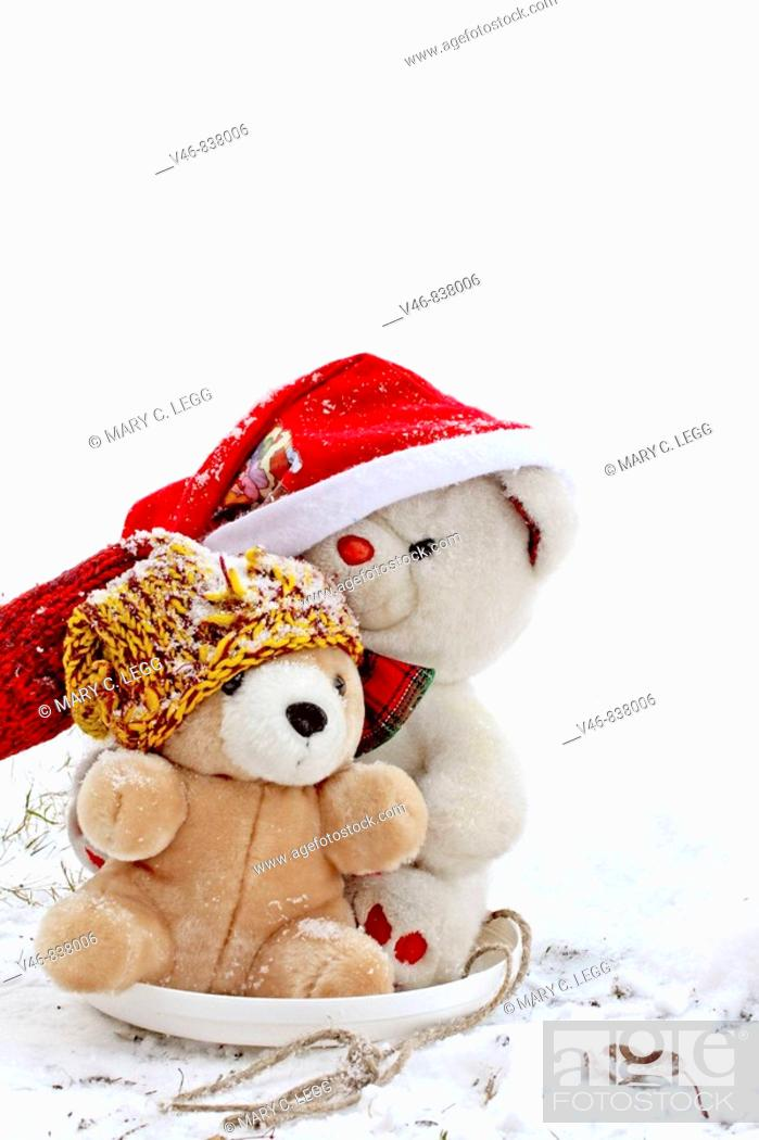 Stock Photo: Two Teddy Bears go sledding on a frisbee on a cold January morning.