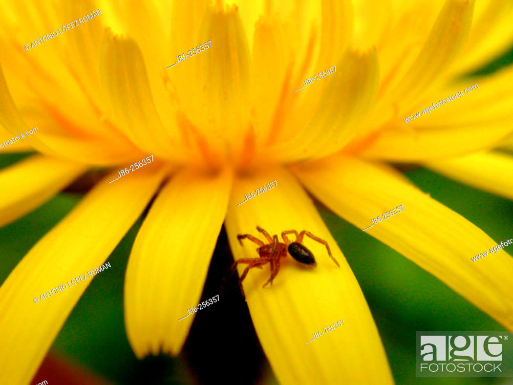 Stock Photo: Spider on petal.