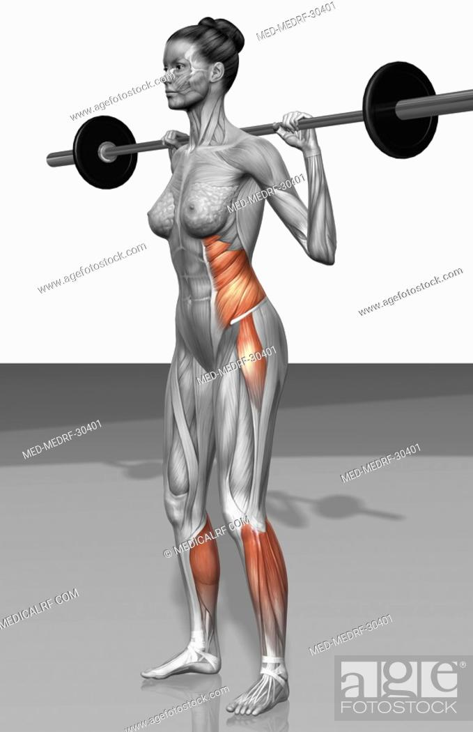 Stock Photo: Barbell squat exercises Part 2 of 2.