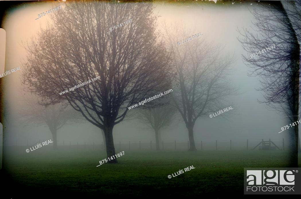 Stock Photo: Trees in fog.