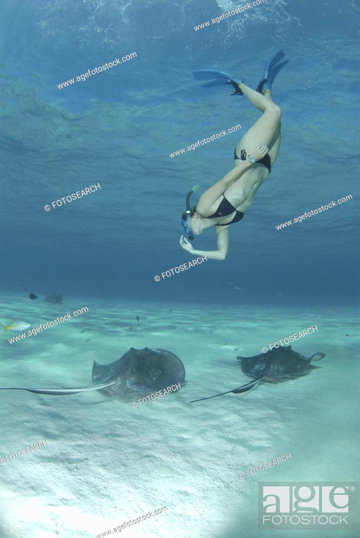Stock Photo: Snorkeller swimming down to Southern Stingrays Dasyatis Americana Stingray City Sandbar, Grand Cayman Island, Cayman Islands, Caribbean.