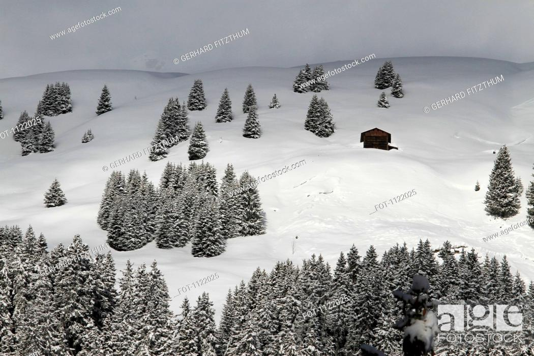 Stock Photo: Winter chalet amidst the trees on snowy hill.