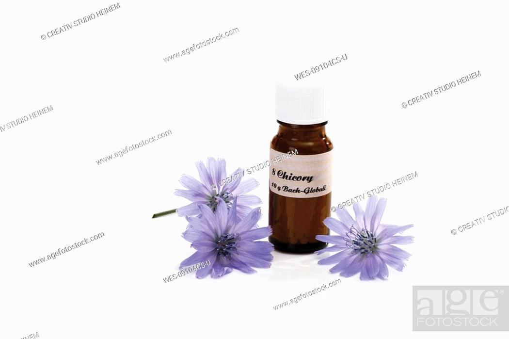 Stock Photo: Bottle with Bach Flower Stock Remedy, Chicory Cichorium intybus.