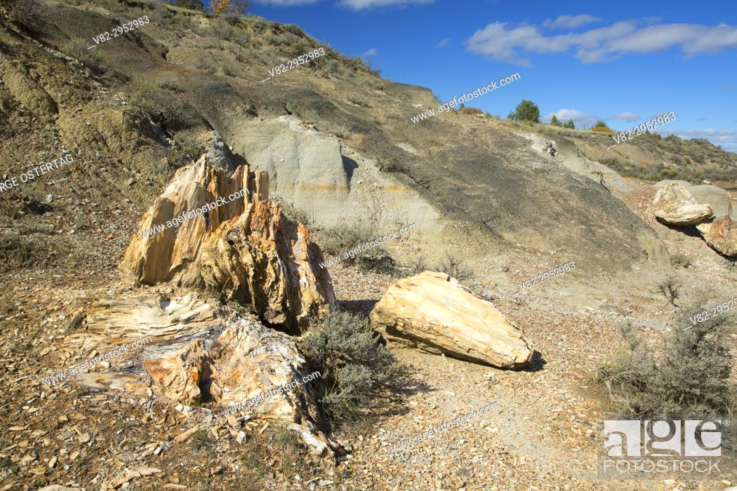 Stock Photo: Petrified wood along North Petrified Forest Trail, Theodore Roosevelt National Park-South Unit, North Dakota.