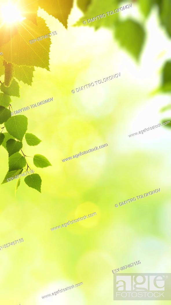 Stock Photo: Minight haze in the forest, natural backgrounds.