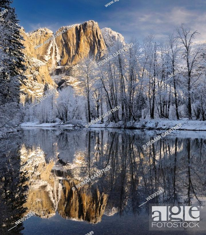 Stock Photo: Snow covered trees and Yosemite Point and the Upper Fall reflected in the Merced River in winter.