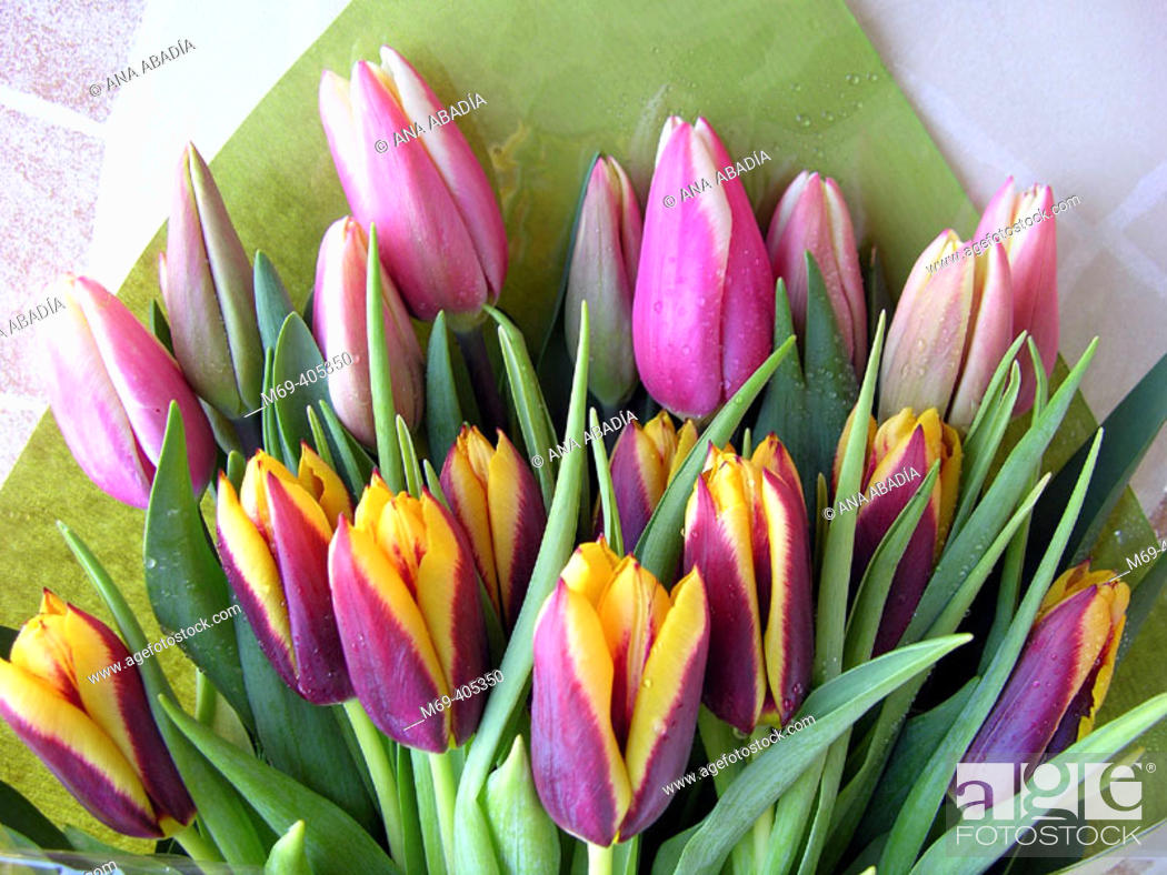 Stock Photo: Tulips.