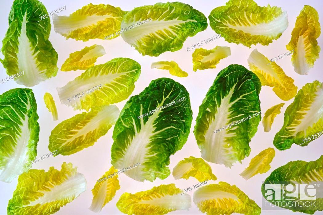 Stock Photo: Romana Salad Leaves.