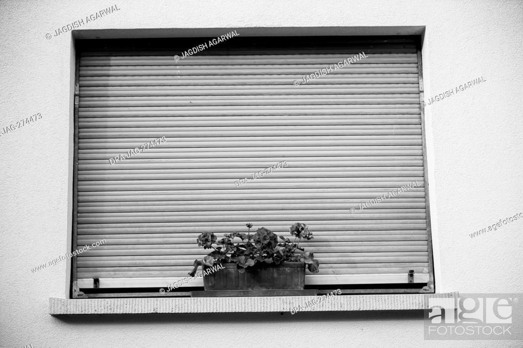 Stock Photo: Flower pot on windowsill, Storkensohn, Haut Rhin, Grand Est, France, Europe.