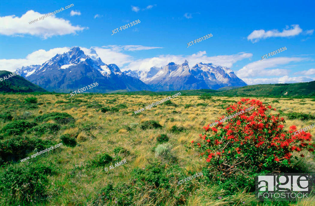 Stock Photo: Chile, Torres del Paine national park.
