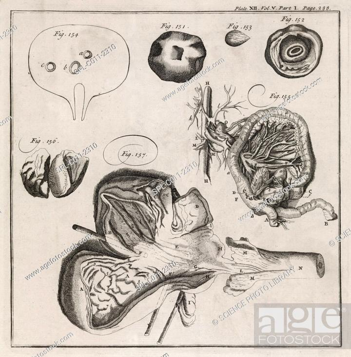 Stock Photo: Biological illustrations. 18th-century journal page with various artworks. The three at upper right show the hazards of swallowing fruit stones.