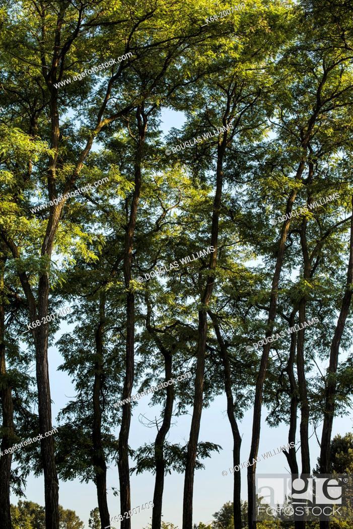 Stock Photo: Trees at Langara College, Vancouver, BC, Canada.