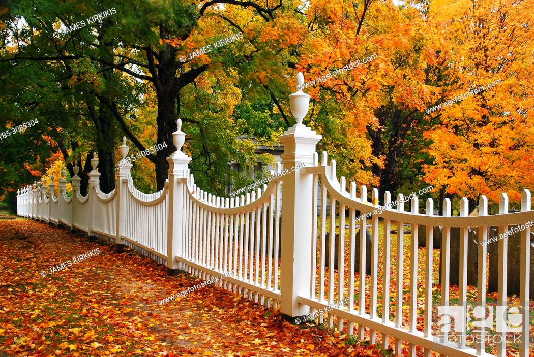 Imagen: Autumn leaves are framed by a white picket fence.