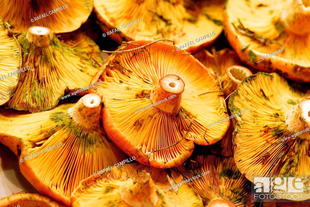 Stock Photo: Mushrooms (Lactarius deliciosus) at La Boqueria market, Barcelona. Catalonia, Spain.