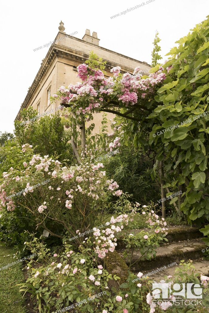 Imagen: Archway of miniature pink roses cascading down the lichen covered steps of Frampton Court gardens on a lazy, hazy day in Summer, the Cotswolds, England.