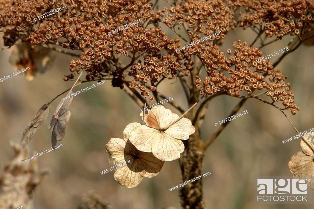 Stock Photo: felder, wiesen, berne, blooms, blumenrfarben, botany, colored.